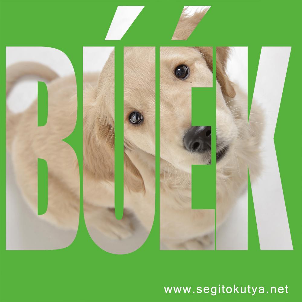 buek_2016